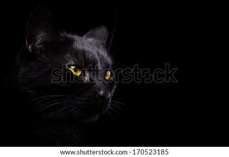 Black cat is isolated a black background - stock photo