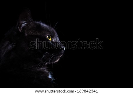 Black cat is isolated jn a black background - stock photo