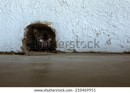 Black Cat is waiting in the rat hole. - stock photo