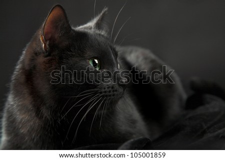 black cat isolated on the black background - stock photo