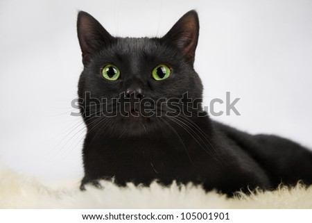black cat isolated on the white background - stock photo