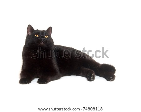Black cat laying down on white background