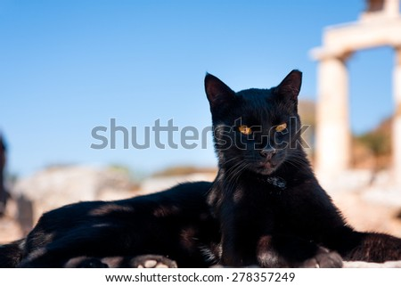 Black Cat like a panthera or sphinx - stock photo