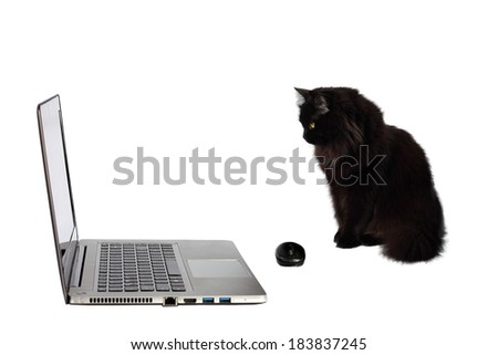 Black cat looking at laptop.