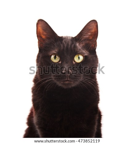Black cat looking up, on white background