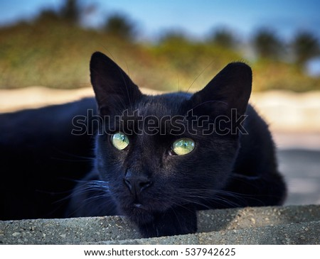 Black cat looks in your eyes