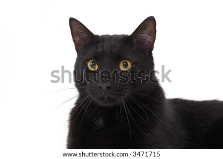 black cat lying down, isolated - stock photo