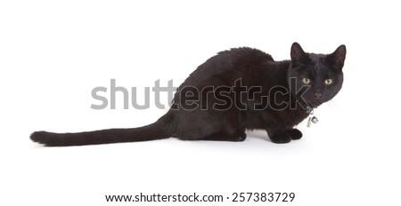 Black cat lying isolated on white background - stock photo