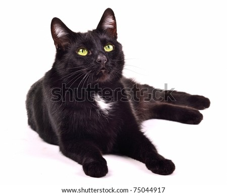 Black cat lying looking up isolated on white background