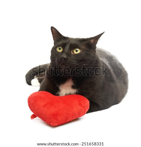 Black cat lying next to the toy red plush heart isolated over the white background - stock photo