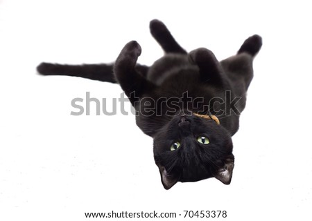Black cat lying on it's  back. - stock photo