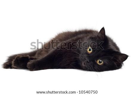 black cat lying on white - stock photo