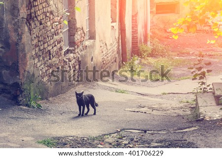 Black cat on a background of an old stone building. Toned - stock photo