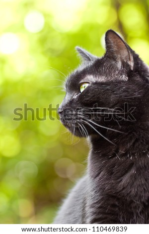 Black cat on a green background - stock photo