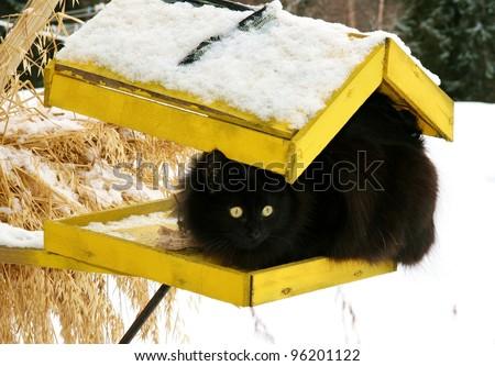 Black cat on a yellow bird's feeder - stock photo
