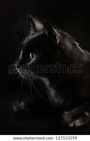 Black cat on black background - stock photo