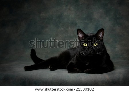 Black Cat on dark backdrop - stock photo