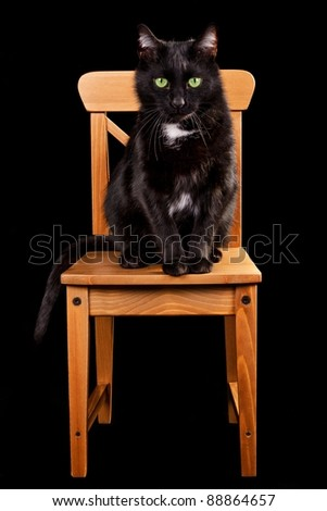 Black cat on wooden chair isolated - stock photo