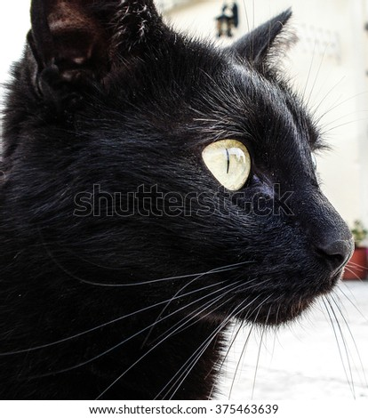 Black cat or black panther - stock photo