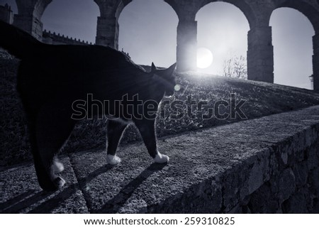 Black cat passing on a wall next to a medieval area of the old Europe - stock photo