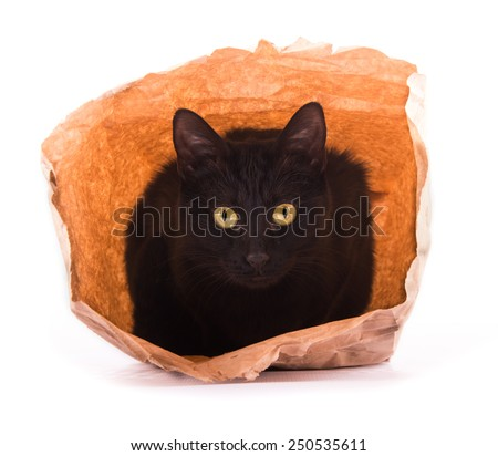 Black cat playing and hiding in a brown paper bag, looking out with curiosity - stock photo