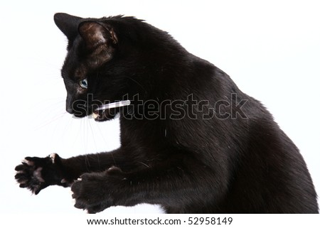 Black cat playing with a straw on white background - stock photo