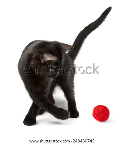 black cat playing with red clew - stock photo