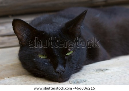Black cat portrait, focus on green eyes.