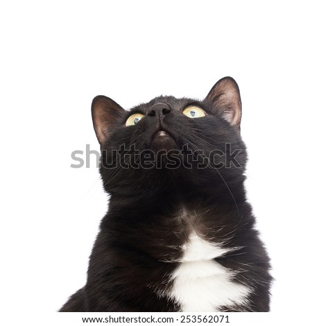 Black cat portrait looking up, isolated over the white background - stock photo