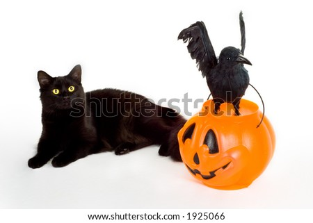 Black Cat, Raven and Candy Pumpkin. - stock photo
