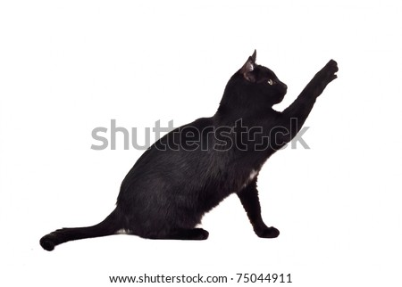 Black cat reaching up for toy and showing its claws - stock photo