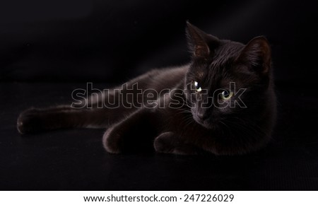 Black cat resting against dark background, disappearing into the shadows - stock photo