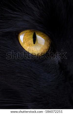 Black Cat's Eye - stock photo