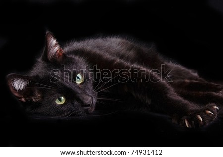 Black cat showing it's claws lying on black background looking at camera - stock photo