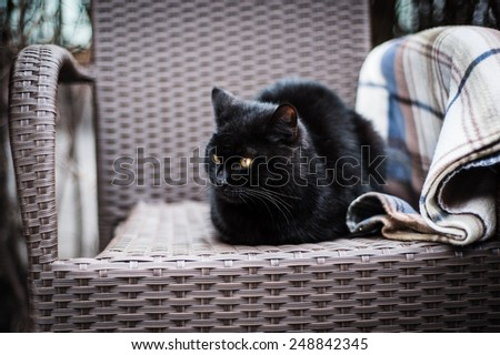 Black cat sitting in a chair in the summer cafe - stock photo
