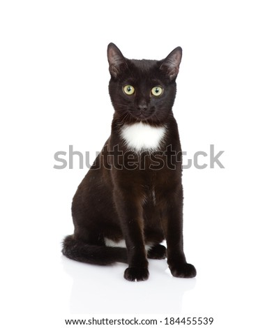 Black cat sitting in front and looking at camera. isolated on white background - stock photo