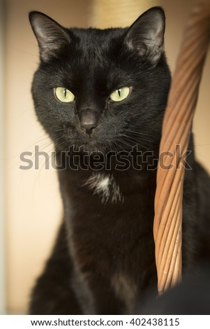 black cat sitting near the basket in the room - stock photo