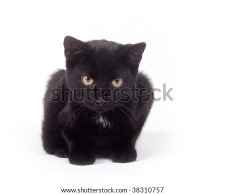 Black cat sitting on a white background