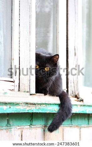 Black cat sitting on a windowsill and looking into the camera lens - stock photo