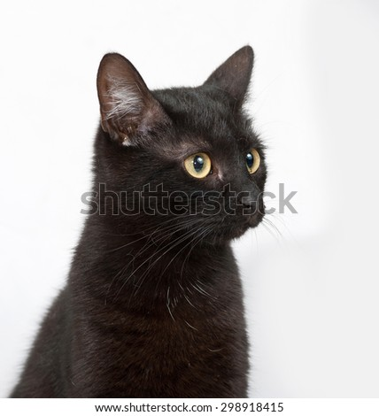 Black cat sitting on gray background