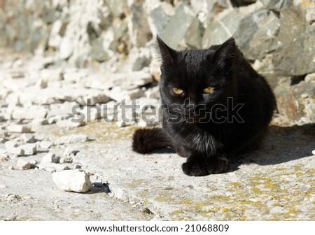 Black cat sitting on the ground. - stock photo