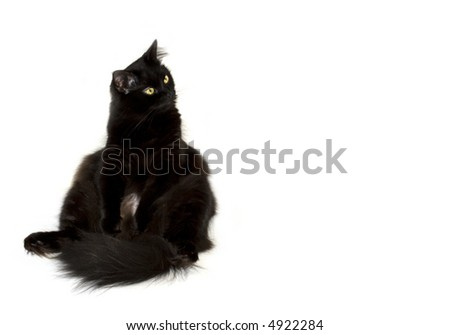 Black cat sitting on the left and watching to the right isolated on white - stock photo