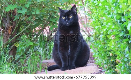 Black cat sitting outside in the bushes