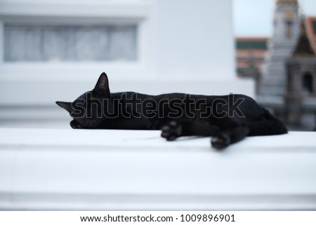 Black cat sleep in Thai Tample
