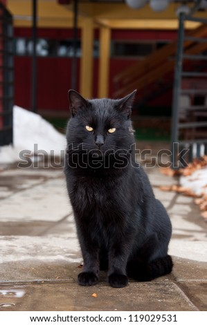 black cat standing on the way - stock photo