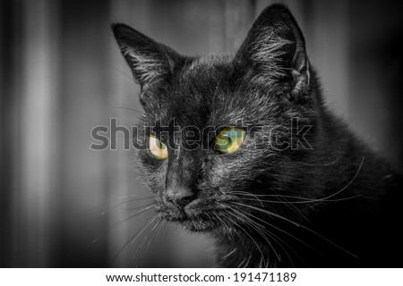 Black cat stares intensely with big green eyes - stock photo
