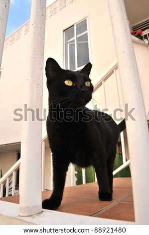 Black cat waiting for his friends - stock photo