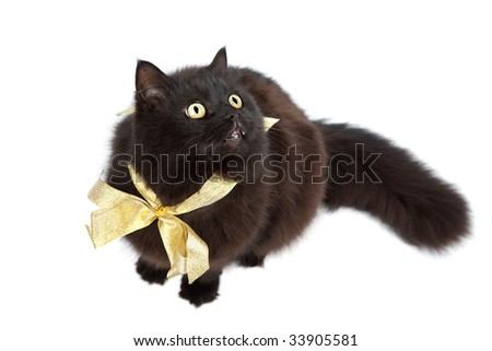 black cat wearing golden bow isolated - stock photo