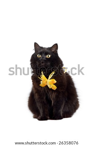 black cat wearing yellow bow isolated - stock photo