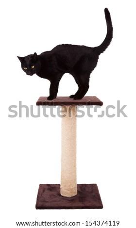 Black cat with a scratch pole isolated on white - stock photo